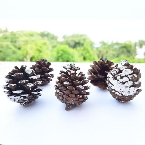 Pine Cones 35mm - Pack of 2